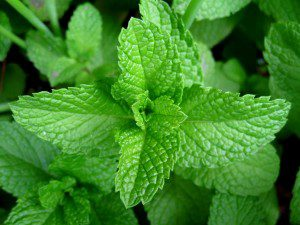 Mint is such a powerful flavoring that doesn't use it for very several things; but when you need it, everyone is glad to have some around.