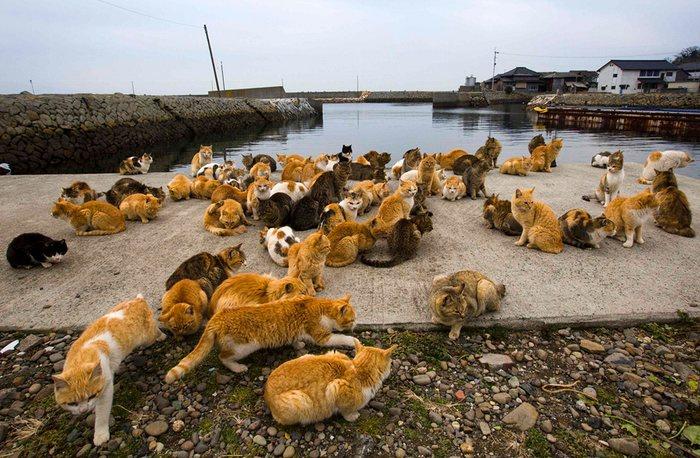 Cat Cafe America