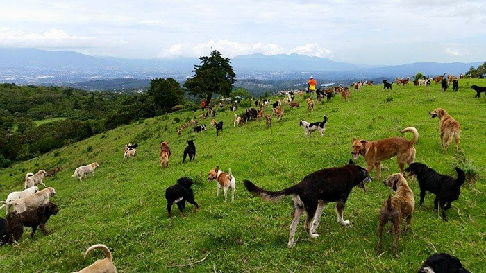 The Land of Strays in Costs Rica