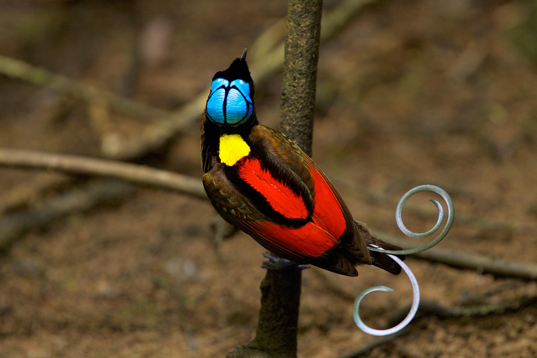 Beautiful papua new guinea women dating 7