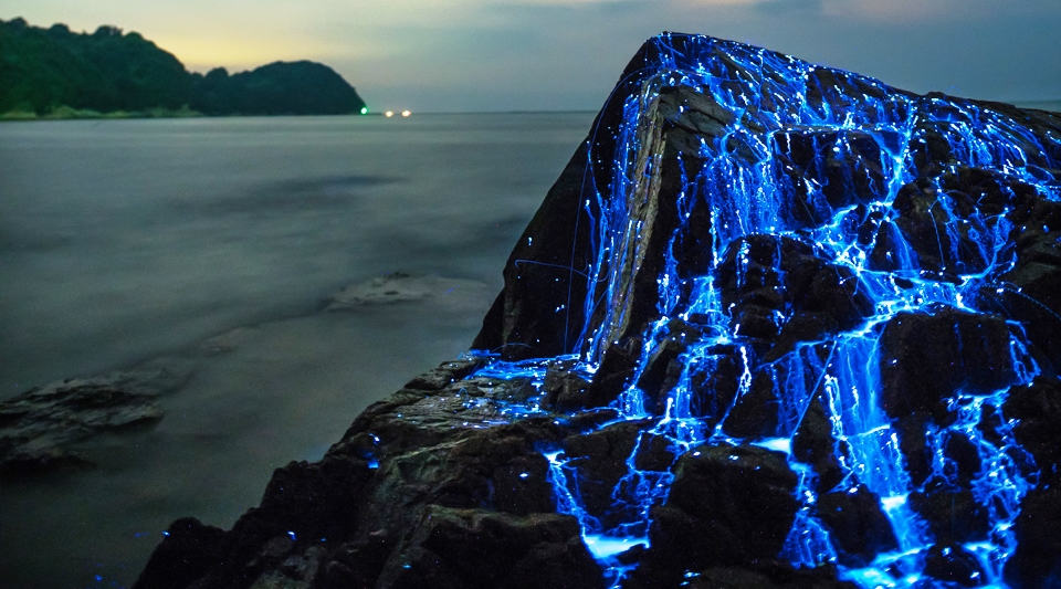 The Blue Rivers Of Bioluminescent Shrimp Charismatic Planet