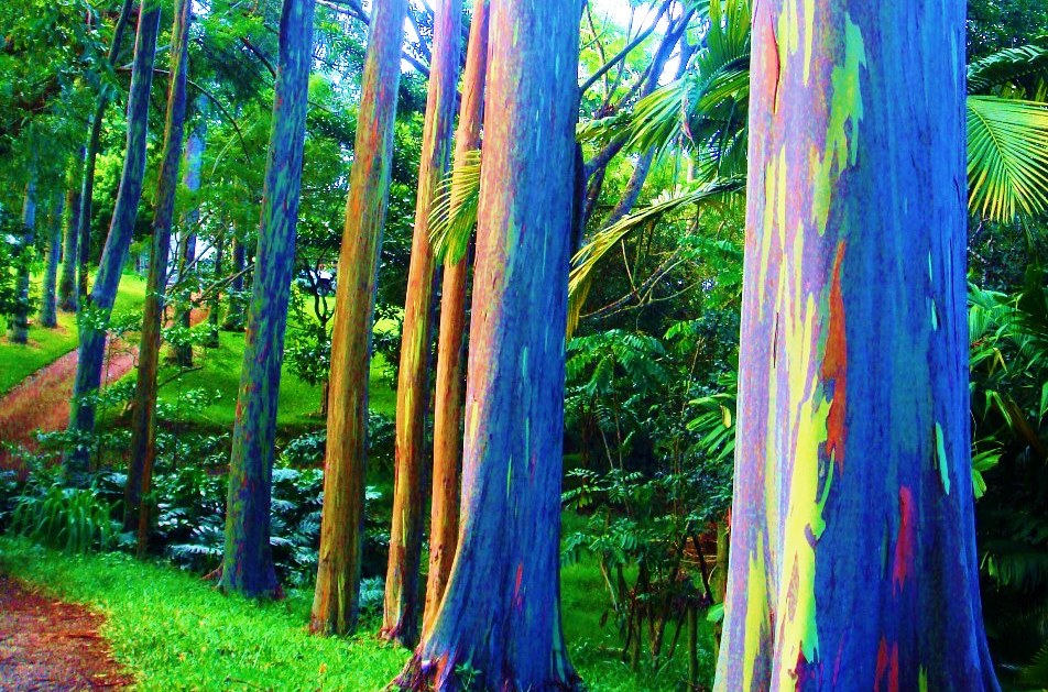 Rainbow Trees In The Philippines & Where To Get Them!