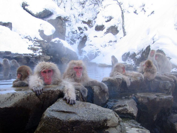 Jigokudani is a valley surrounded by steep rock walls where steam can be seen rising from natural hot springs.