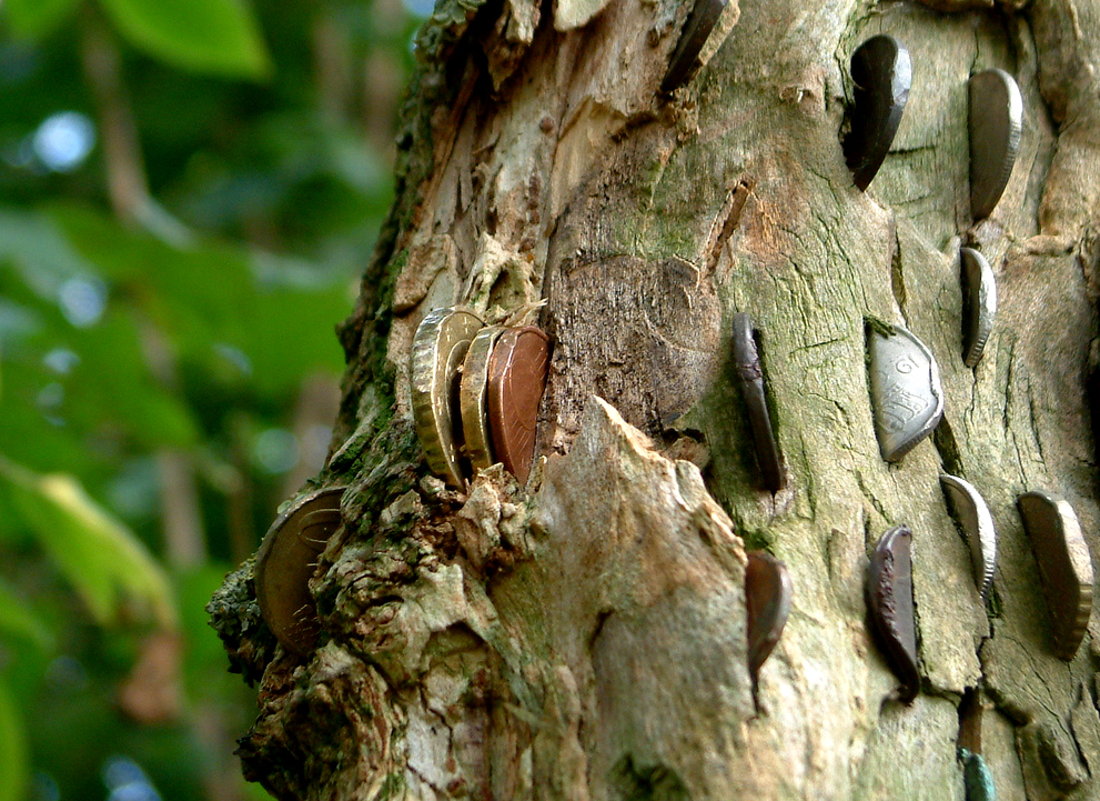 Few centuries ago, around UK people would put coins into trees in order to make wish.