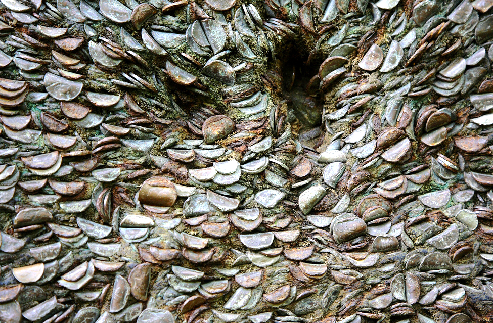 The odd marvel of gnarled old trees with coins embedded all over they're bark has been spotted on trails from the Peak District to the Scottish Highlands.