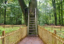 """In Germany a 500 year old tree called """"The Bridegroom's Oak"""" in the Dodauer Forst forest near of Eutin, has its own postal address and actually receives about 5 to 6 letters every day."""