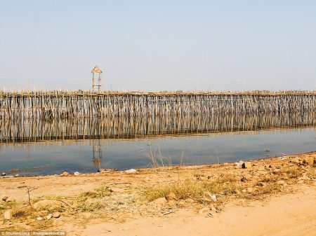 The Bamboo Bridge is strong enough to accommodate motorbikes, cars, bicycles and Trucks.