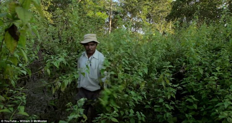 Payeng said that at first planting was very time consuming but now it's much easier because the trees seed themselves