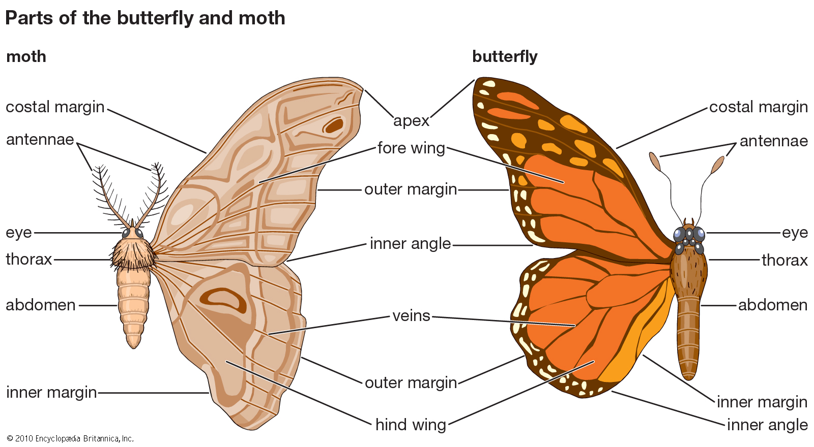 What is the Difference Between a Butterfly and Moth? - Charismatic ...