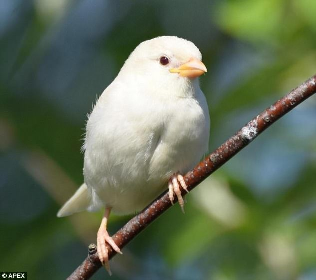 They are extremely rare in themselves, but a true albino bird, with pink eyes and white feathers is incredibly rare.