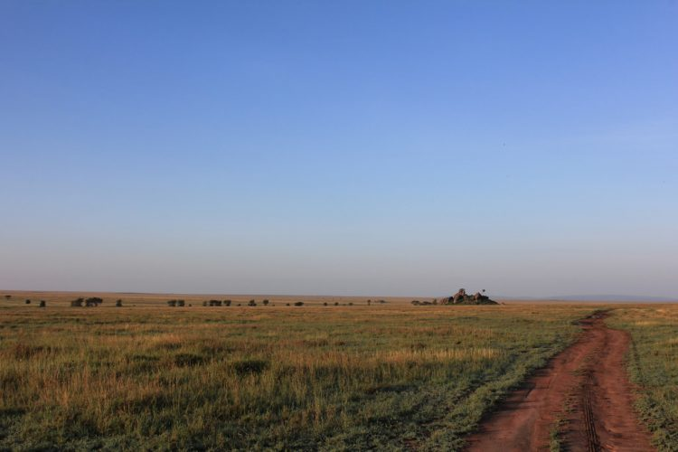Serengeti is 30k Square Kilometers vast plain of grassland, woods and swamps stretches from North-Western Tanzania into South-Western Kenya.