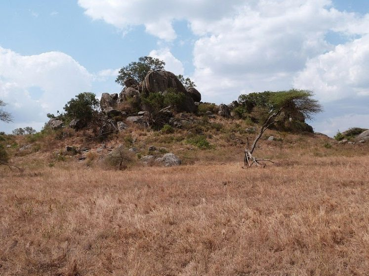 Dotting this vast savannah are outcrops of granite that stick out like rocky islands in a sea of grass. They are called kopjes, formed with soft volcanic rock and ash.