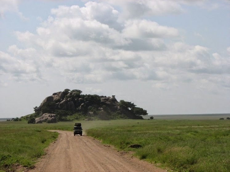 It creates a rich and fertile soil that produces short, sweet grass while raining. When the surface rock and soil wore away, it exposed the uneven top of the granite layer forming kopjes.
