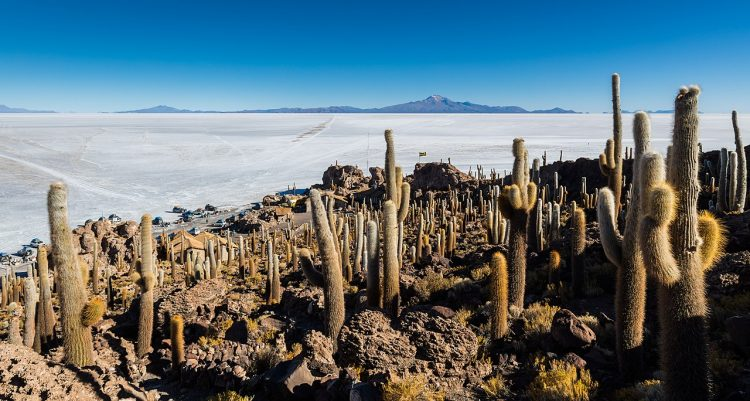 It is situated in the middle of Salar de Uyuni, the world's largest salt flat. Isla Incahuasi elevation is 3,656 meters.