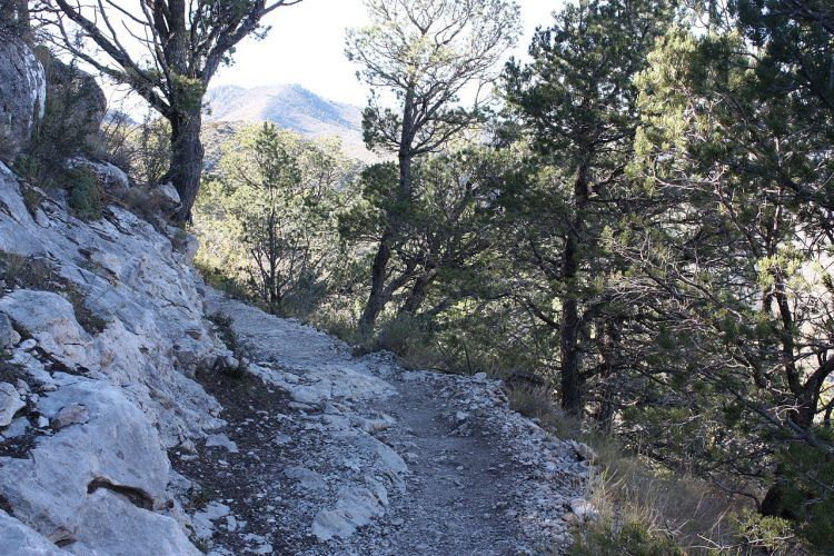 A beautiful well maintained stony trail of 6.8 kilometers each way with an over 3,000 feet elevation gain during the round of year.