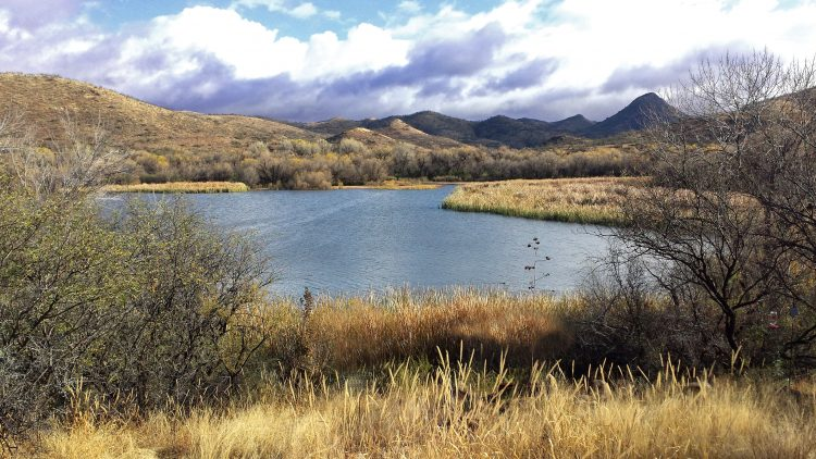 The 250-acre lake located inside the Patagonia Lake State Park established Sonoita Creek State Natural Area in 1975.