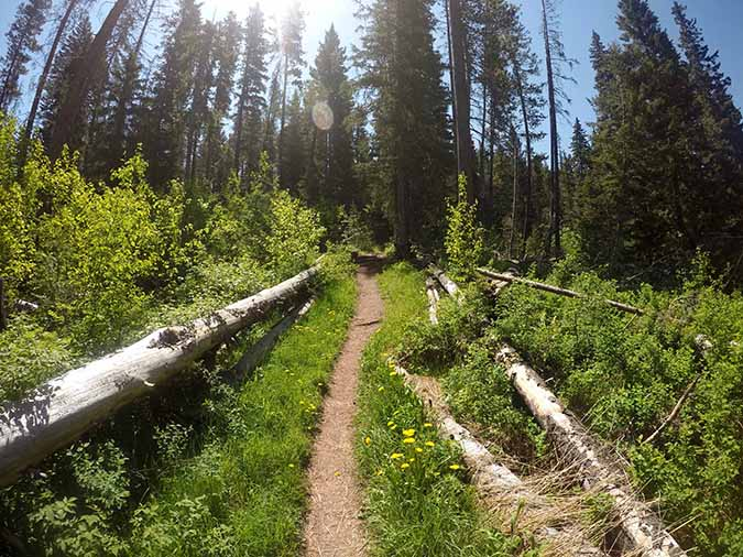 Don't misjudge this inspiring trail! Though it is just under two miles in length, it packs quit the punch, The trail of Bear Canyon follows Bear Creak up, the lush, shady, and eventually to Bear Lakes.