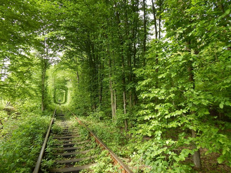 Trees with overhanging branches were left to grow freely around the line, thus, the passing train is the only thing, which is shaping its way through.