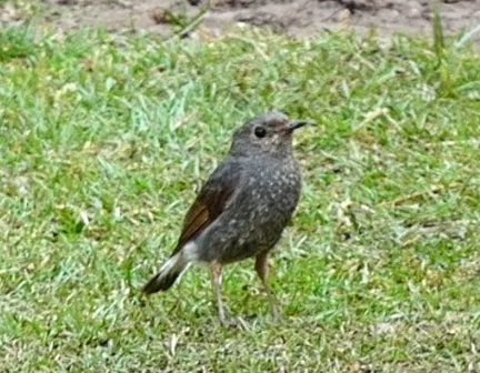 Songbirds singing is complex behavior stimulated rapidly advancing researching various disciplines notably neurobiology & behavioral ecology