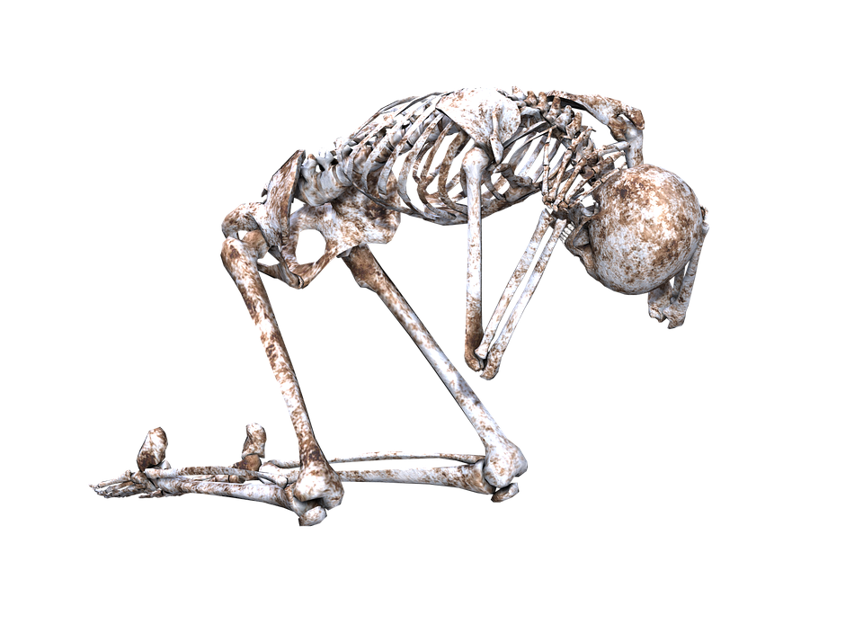 Why do we have a skeleton? There are two main jobs that the skeleton does it supports the body, and it protects delicate organs.