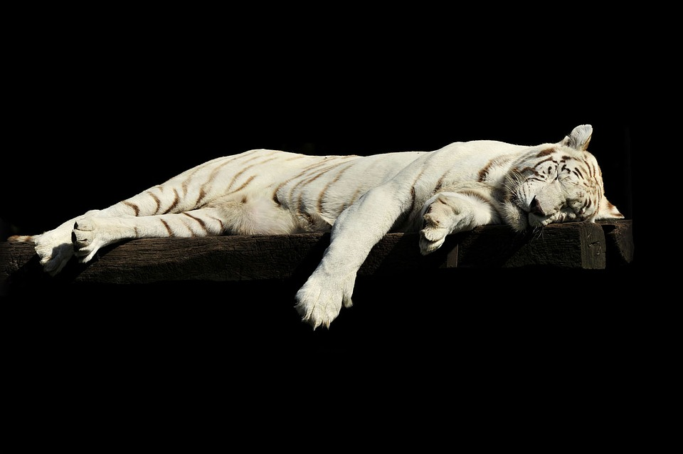 Why Do We Sleep? How Much Sleep Do We Need? There is living creature that does not need sleep or complete rest every day.