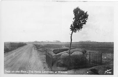 A 1927 Post Card of Tree in the Rock Wyoming