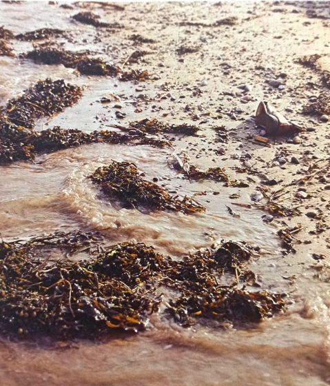 Also, seaweed being is washed ashore by the incoming tide. However, the evidence of man's untidy habits is usually all too clear among the detritus of the strandline.